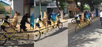 Cet homme et ses chiens, participant à une course cycliste est la meilleure chose à voir