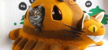 Un couple crée des lits en laine feutrée décoratifs pour chats