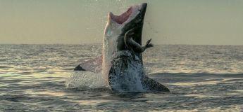 Vidéo : un grand requin blanc filmé en train d'approcher un bateau