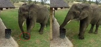 Cet éléphant est probablement beaucoup plus discipliné que certains d'entre nous