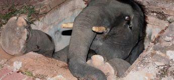 20 animaux photographiés dans des situations insolites