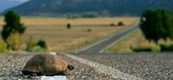 Un chauffeur de bus s'arrête pour aider une tortue à traverser la route (vidéo)