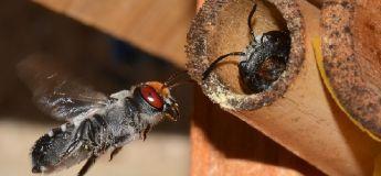 Argentine : une abeille a utilisé des déchets plastique pour fabriquer son nid en entier