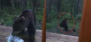 Cela ne se passe qu'en Russie, un homme a effrayé un grand ours qui essayait de voler ses poubelles