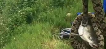 Vidéo : Un pêcheur attrape… un serpent accroché à un poisson