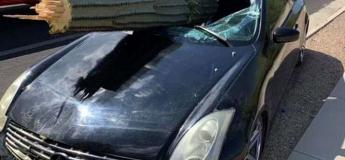 En Arizona, un cactus géant transperce le pare-brise d'une voiture, le chauffeur est indemne