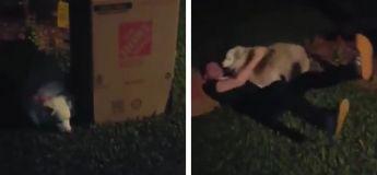 La réaction de cette chienne en découvrant la surprise qu'on lui a fait est adorable (Vidéo)