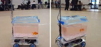 Ce poisson rouge peut contrôler sa direction en fonction de son positionnement dans l'aquarium