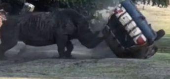 Un rhinocéros a renversé une voiture contenant le gardien au German Safari Park