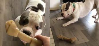 L'adorable danse de joie de ce chien va instantanément améliorer votre humeur
