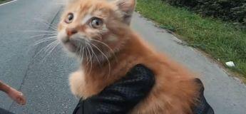 Un motard français sauve la vie d'un chaton au milieu d'une autoroute