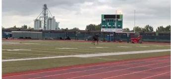 Un élan se promène sur le campus universitaire et  passe la journée sur le terrain de football