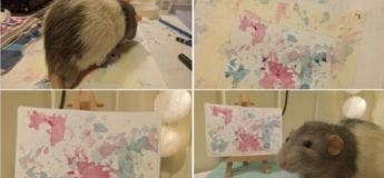 Une étudiante en art entraîne son rat domestique à peindre avec ses pieds