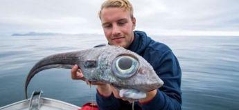 Un poisson « semblable à un dinosaure » avec des yeux exorbités a été capturé en Norvège
