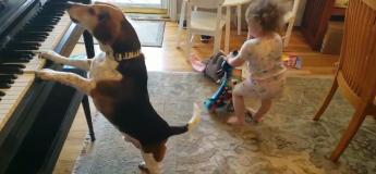 Quand la passion pour la musique anime un chien et un bébé !