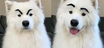 «Et si nos chiens avaient des sourcils», vous allez adorer cette vidéo