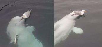 Impressionnant : un dauphin vient en aide à un oiseau affamé