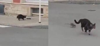 Quand ça devient la souris qui chasse le chat, rien d'autre ne nous surprendra jamais