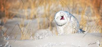 Les photos sélectionnées pour la finale du Comedy Wildlife 2019 dévoilées