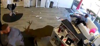 Un cerf veut se faire une coupe de cheveux dans un salon de coiffure et rentre tête baissée !