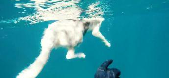 Un homme sauve sa chienne qui l'avait suivi dans l'eau d'une attaque de requin (vidéo)