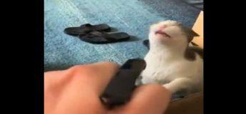 La façon dont ce chat esquive sa punition est géniale