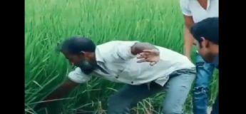 La vidéo de cet homme tentant d'extirper un serpent caché dans l'herbe connaît un rebondissement inattendue