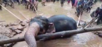 Un village entier s'unit sauver un éléphant de la noyade