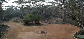 Une Australienne retrouvée dans la brousse après que son message de « SOS » ait été repéré par une caméra de surveillance
