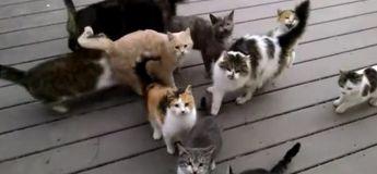 Une dizaine d'adorables chats rendent visite à cet homme chaque jour