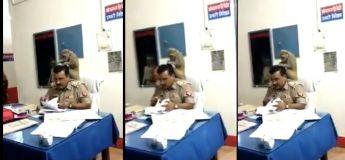 Un singe cherche des poux dans les cheveux du policier pendant qu'il travaille