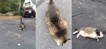 Ce gros chat n'arrive pas à se rouler par terre à cause de son surpoids, et c'est à la fois attristant et hilarant