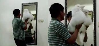 Quand ton papa refuse l'idée d'adopter un chat et qu'après des jours tu le trouves faisant ça