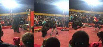 Grand chaos durant un spectacle de cirque quand un ours a attaqué son dresseur