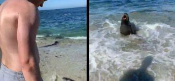 Un phoque est sorti de nulle part et a totalement effrayé ce couple