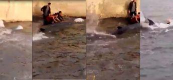 Un baleineau s'égare et s'est retrouvé au beau milieu d'un bassin en Turquie !