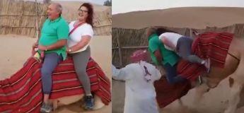 Ce chameau n'a littéralement pas pu supporter le surpoids du couple assis sur son dos