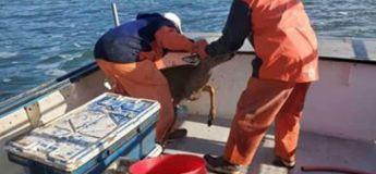 Ces pêcheurs ont trouvé  un animal improbable dans l'océan et se sont précipités à sa rescousse