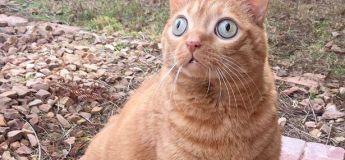 Ce chat aux yeux étrangement globuleux est la nouvelle coqueluche d'Instagram