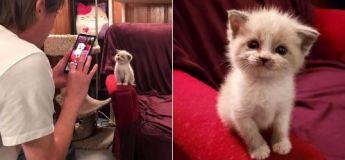 Ce chaton de 5 semaines a séduit les médias sociaux
