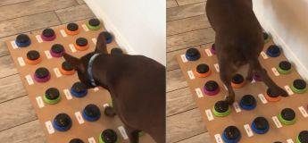 Une femme apprend à son chien à parler et le malaise est total !