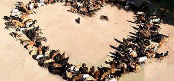 Cet homme a créé un refuge avec 750 chiens après avoir commencé avec un seul !