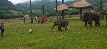 Un bébé éléphant est frustré après avoir pourchassé un chiot sans l'attraper