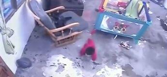 Vidéo: un chat a sauvé un bébé d'une chute sur l'escalier