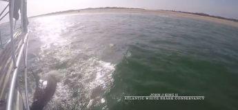 Massachusetts, un expert sursaute pour éviter un requin blanc