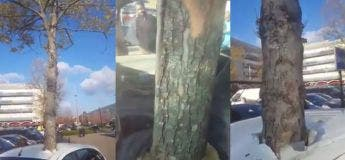 Nantes : un arbre a poussé à travers une voiture
