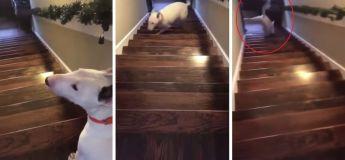 Ce chien décide de descendre les escaliers autrement et c'est à la fois déroutant et hilarant !