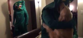 Ce gars s'est habillé comme le jouet préféré de son chien, la réaction de ce dernier est incroyable !