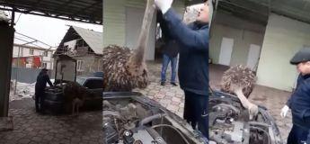 Une autruche refuse de laisser cet homme réparer tranquillement sa voiture