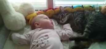 Pauvre chat : il ne sait pas comment s'occuper du bébé et finit par tomber